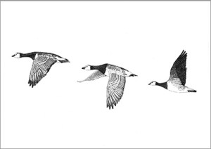 SHOP small barnacle geese